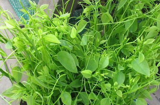 Lâm Đồng: Trồng thứ rau rừng tốt bời bời trong vườn sầu riêng, cứ 1 sao nông dân thu 20 triệu/tháng
