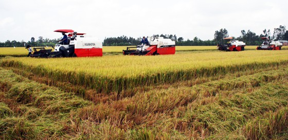 ĐBSCL: Nông dân bán lúa nhanh, giá gạo xuất khẩu tăng