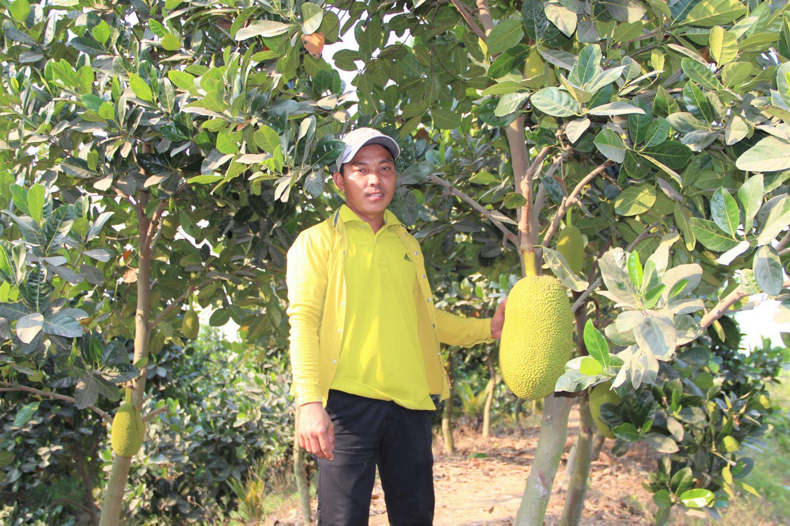 Long An: Nông dân trồng cây ăn trái đang làm cách nào để